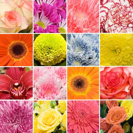 Collage from beautiful fresh colours Stock Photo - 6722855