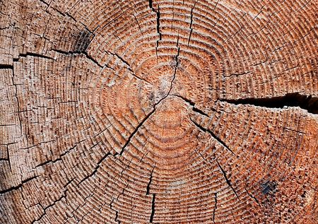 Cut of an old tree.  Close up Stock Photo - 6817955