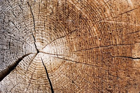 Cut of an old tree. Close up