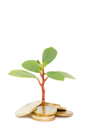 Young plant and coins isolated over white photo