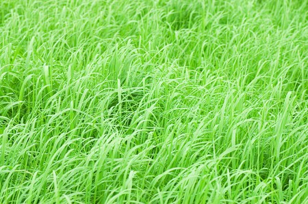abstract close-up green grass Stock Photo - 7226733