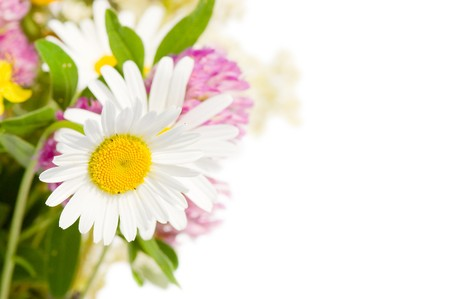 Bouquet of wild flowers isolated on white background Stock Photo - 7389994