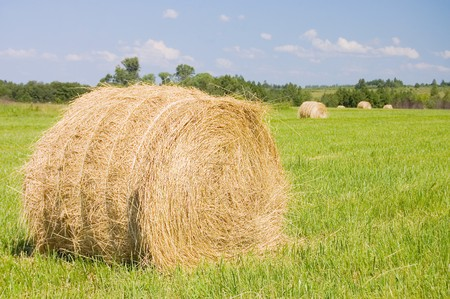 haystacks harvest against the skies  photo