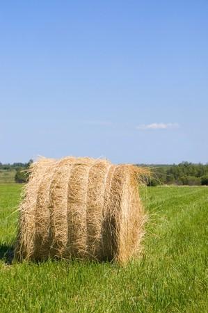 haystacks harvest against the skies Stock Photo - 7499240