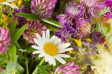 Bouquet of wild flowers Stock Photo - 7562784