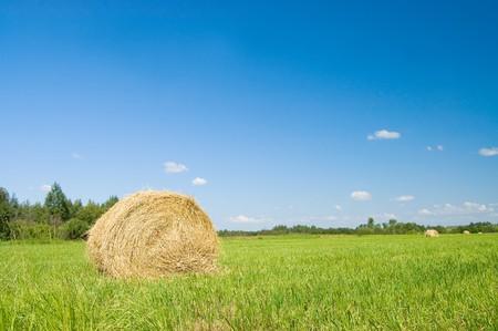 haystacks harvest against the skies Stock Photo - 7562788