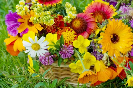 Beautiful flowers in a basket Stock Photo - 7884591