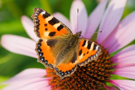 Colored butterfly on flower  photo