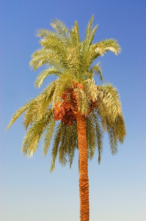 Date palm tree against the sky photo