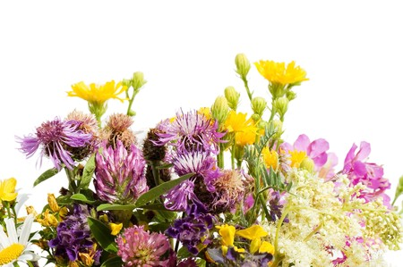 Bouquet of wild flowers isolated on white background  photo