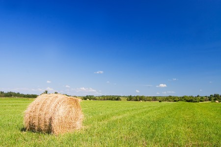 haystacks harvest against the skies  Stock Photo - 7884648