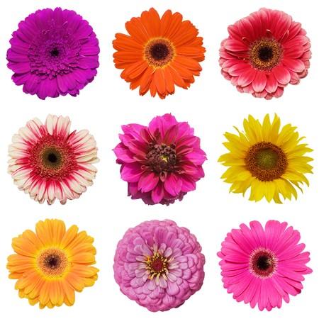 Beautiful flowers isolated on white background photo