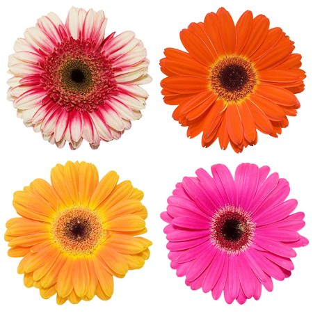 Beautiful flowers isolated on white background Stock Photo - 7884650
