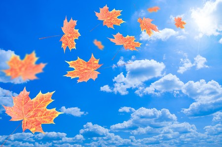 Flying autumn leaves against the blue sky photo