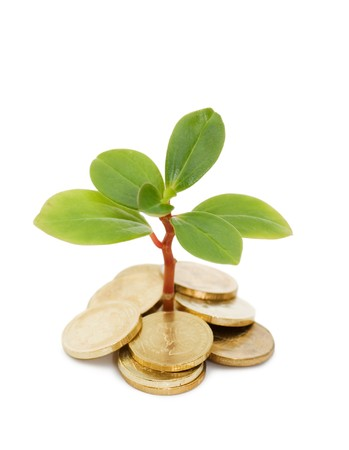Young plant and coins isolated over white