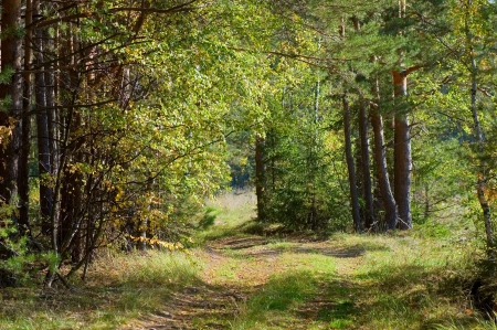 Footpath in autumn wood photo