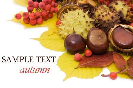 Herbst Bl�tter und Fr�chte, die isoliert auf wei�em Hintergrund  Stockfoto - 8075640