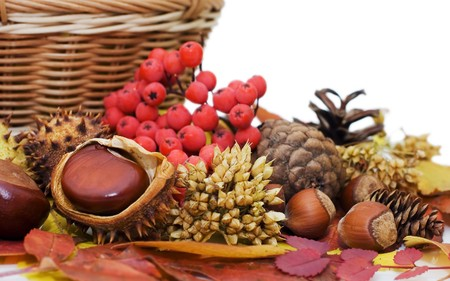Autumn leaves and fruits isolated on white background  photo