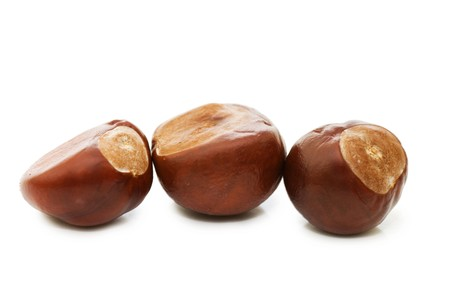 buckeye seed: Brown chestnut nut closeup isolated on white background Stock Photo