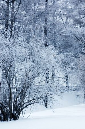 Winter wood photo