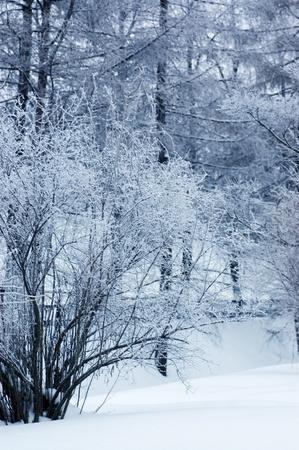 Winter wood Stock Photo - 8596528