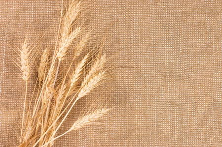 sack: Wheat Ears border on Burlap background Stock Photo