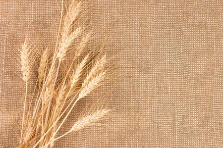 sack background: Wheat Ears border on Burlap background Stock Photo