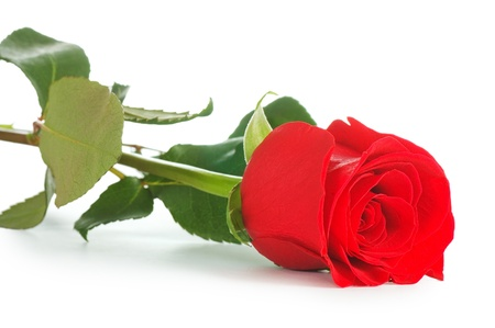 red  green: Red rose isolated on white background Stock Photo