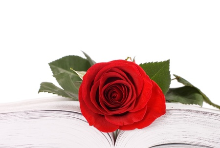 Beautiful red rose on the book isolated photo