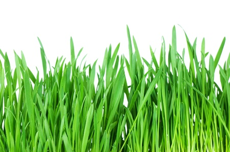 Fresh green grass isolated on white background Stock Photo - 9036154