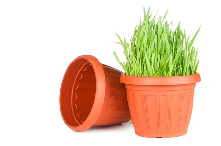 Green grass in a pot isolated on a white background Stock Photo - 9036012