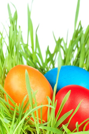 egg easter in a grass Isolated on white photo