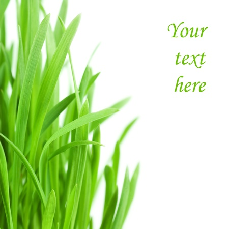 Fresh green grass isolated on white background photo