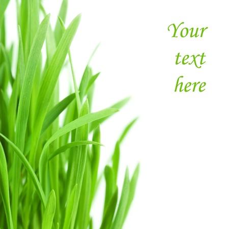 Herbe verte fraîche, isolée sur fond blanc