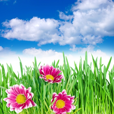 spring flowers in the grass against the sky Stock Photo - 9098065
