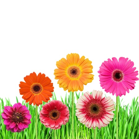 Green grass with pink colours Stock Photo - 9098057