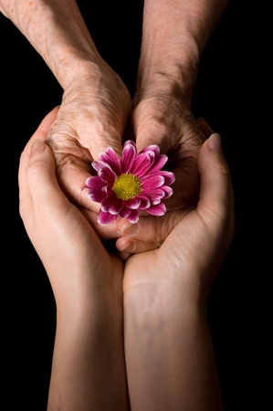 Old hands with a flower on the black Stock Photo - 9177355