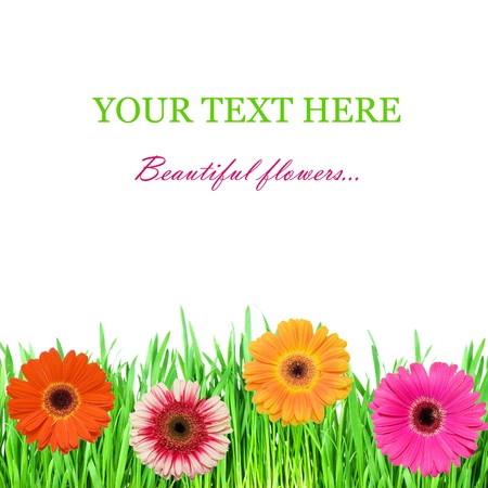 Green grass with pink colours Stock Photo - 9182374