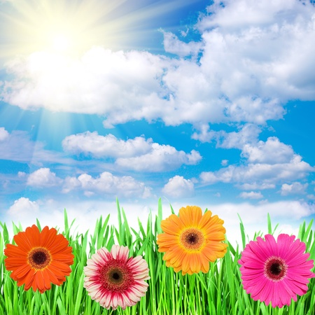 spring flowers in the grass against the sky