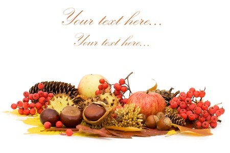 Autumn leaves and fruits isolated photo