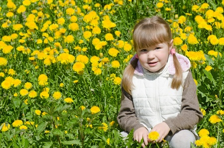 The little beautiful girl collects dandelions photo