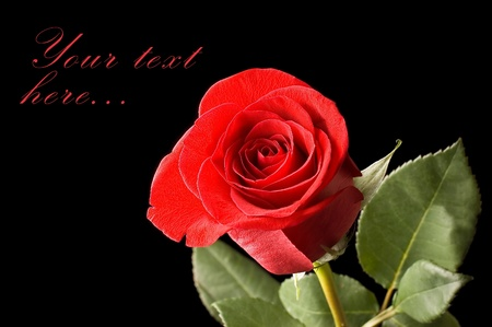 Beautiful red rose on a black Stock Photo - 9609740