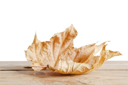 Autumn maple leaf on wooden surface photo