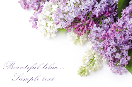 floral arrangement: Beautiful lilac isolated on white background Stock Photo