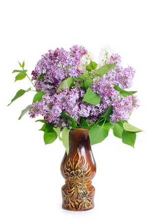 lilac flower: Beautiful lilac isolated on white background Stock Photo