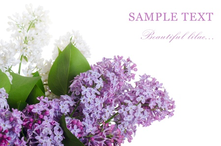 Beautiful lilac isolated on white background photo
