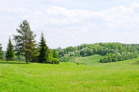 grassy field: Beautiful summer landscape