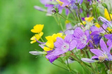 fleurs des champs: Fleurs de printemps magnifique sur un fond blanc