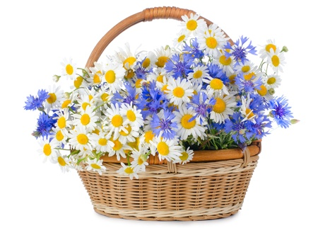 Beautiful flowers in basket isolated on white photo