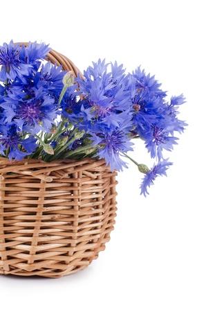 Beautiful blue cornflower isolated on white background photo